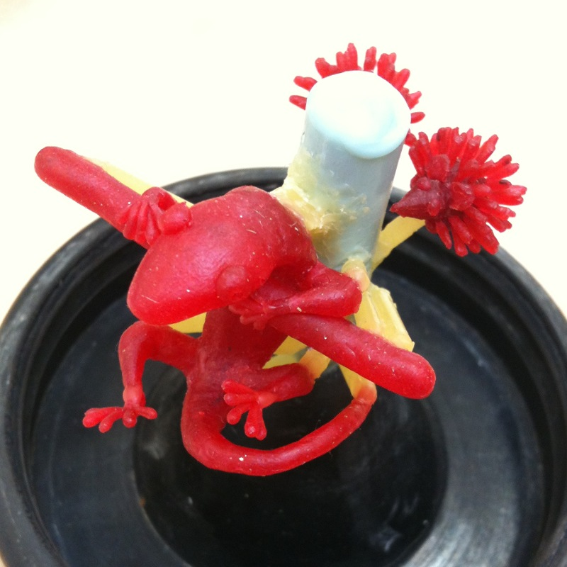 ujo_rocks_story_wax_gecko_hedgehog